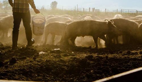Export varkensvlees vorig jaar op recordhoogte